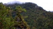 Cerro Hoya National Park